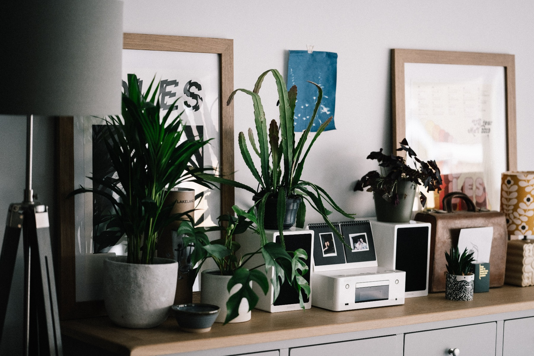 House plants within a lounge