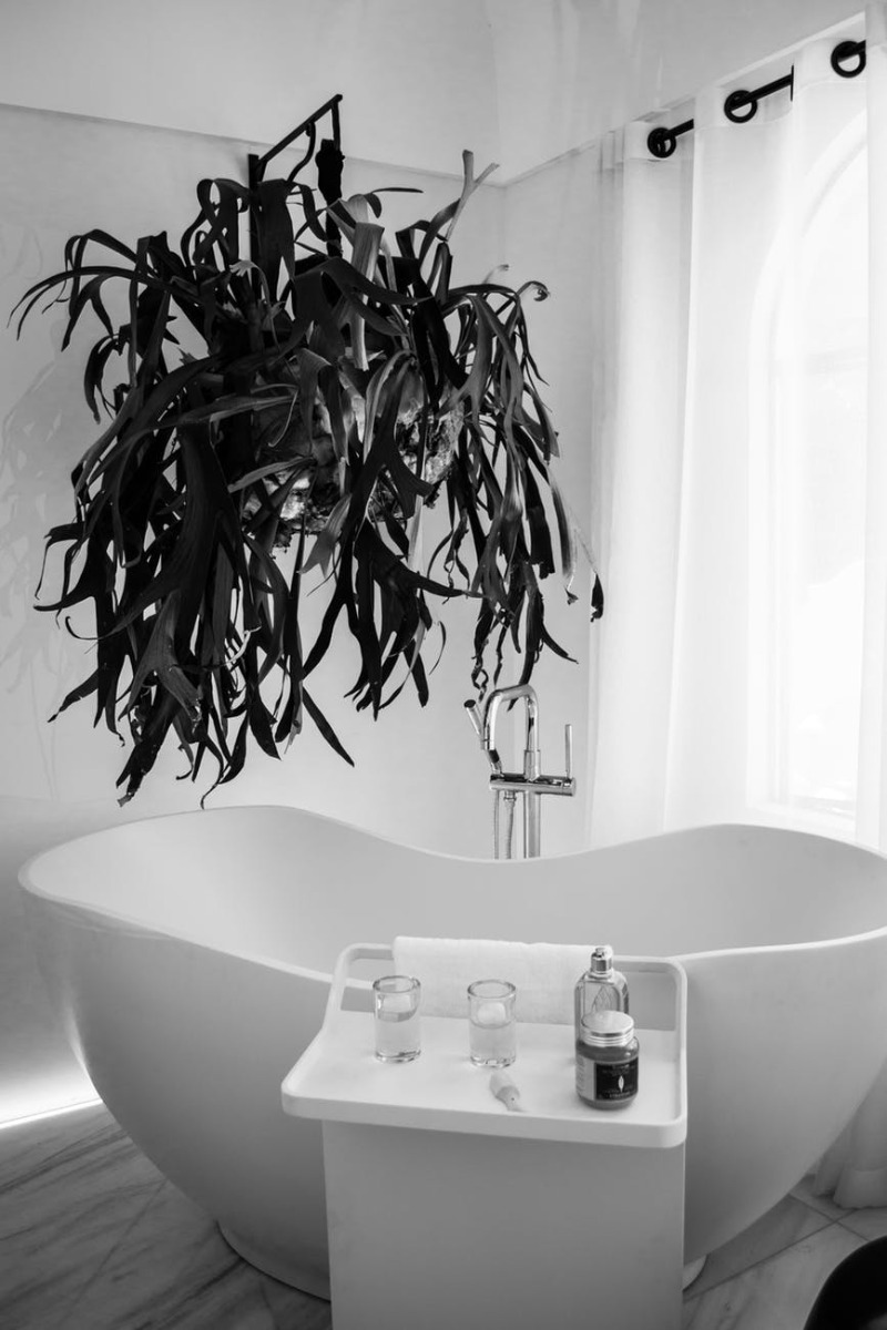 Staghorn fern in a bathroom