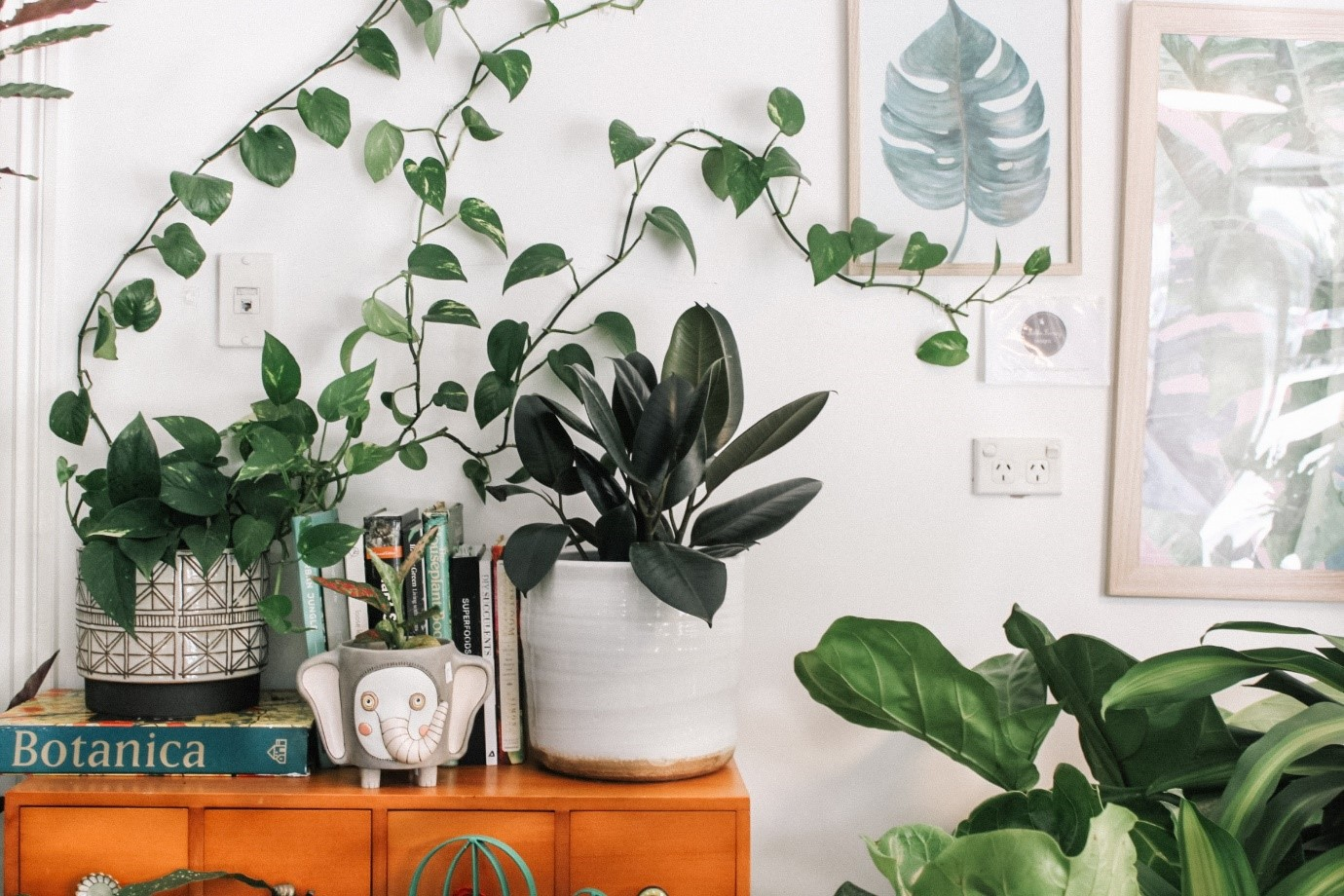House plants clean your air and they are good for the soul