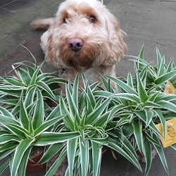 Non Toxic, Pet Friendly House Plants