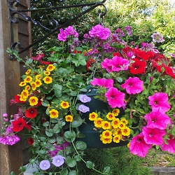 Pots, Planters & Hanging Baskets