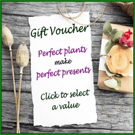 Buy a gift voucher from Perfect Plants Ltd