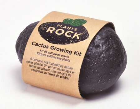 Plants Rock Cactus Grow Kit x 1
