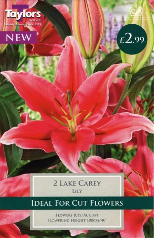 Lily Lake Carey Bulbs x 2 New Variety