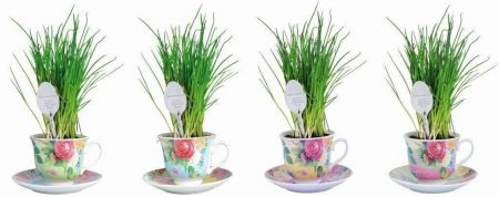 Ceramic Green Tea Cup Herb Grow Kit Gift Pack with Spoon Marker. Chives