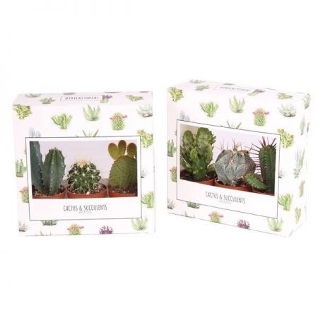 Cactus plants gift pack