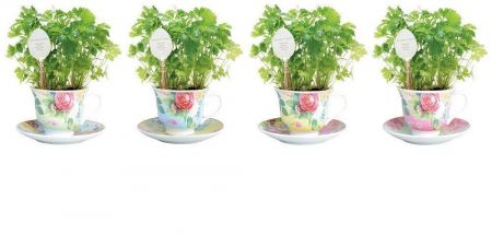 Ceramic Pink Tea Cup Herb Grow Kit Gift Pack with Spoon Marker. Parsley