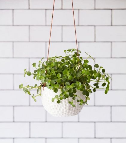 Ceramic Hanging Pot with Dimpled Surface & Leather Cord from Burgon & Ball
