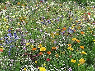 Throw to Grow Jewel Express Flower Seed Mix.  30 annual varieties[50g - 10 sqm]
