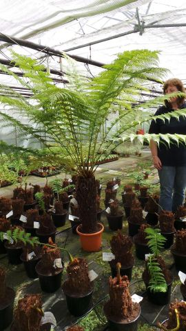 Tree Fern Trunk Size 70cm. Overall height approx 200-210cm