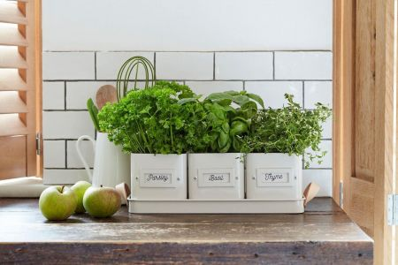 3 Herb Pots in a Leather Handles Tray from Burgon & Ball STONE colour