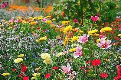 Throw 2 Grow Medieval Meadow Carpet Flower Meadow Seed Mix. 10 annuals & herbs[5g - 1 sqm]