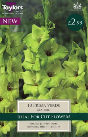 Gladioli Prima Verde bulbs x 10. Green/yellow