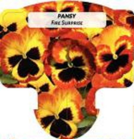 Pansy Fire Surprise bedding plants 6 pack Garden Ready Plants.