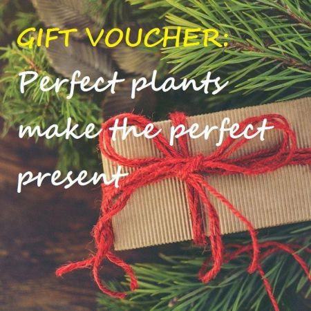 Gift voucher - presents for garden lovers