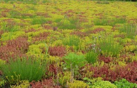 Sedum Seed Mix MX610 for green roofs, walls and free-draining ground. 1 gram.  For direct sowing