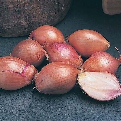 French Shallot Mikor sets  x 10.