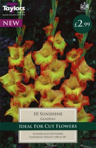Gladioli Sunshine bulbs x 10. Green/yellow
