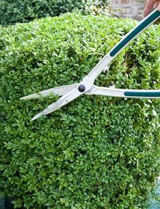 Burgon and Ball Topiary topiary hedge shear. GTO/THS