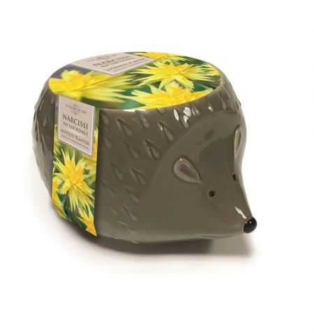 Novelty Hedgehog Planter Complete with Narcissi Rip Van Winkle Bulbs