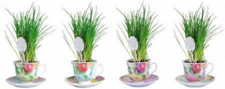 Ceramic Pink Tea Cup Herb Grow Kit Gift Pack with Spoon Marker. Chives