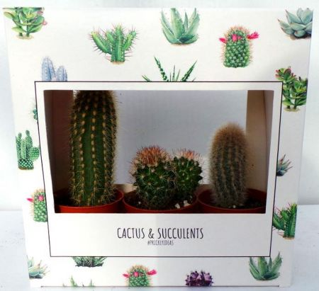 Cacti Plant Collection in a Gift Box. 3 cactus house plants, each in a 5cm pot.
