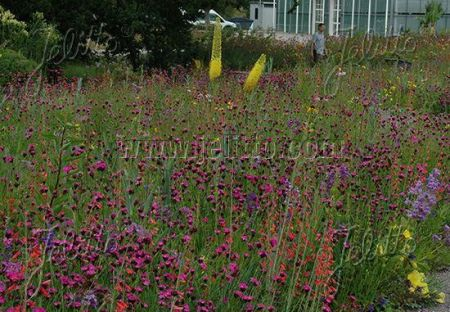 Wildlife Prairie seed mix  1 gram.  Scientifically design for wildlife habitats.