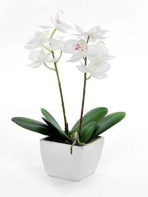 Silk artificial potted cream orchid plant.  Mothers Day, valentines, wedding dec