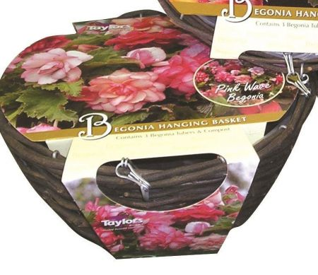 Begonia Hanging Basket Kit. Contains compost. corms and compost
