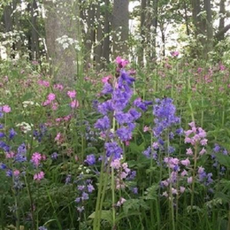 Wild Flower Seed Mix for Woodland and Heavy Shade - 10g