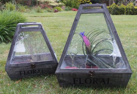 Pair of Terrariums. Environment for house plants. Timber finished in grey