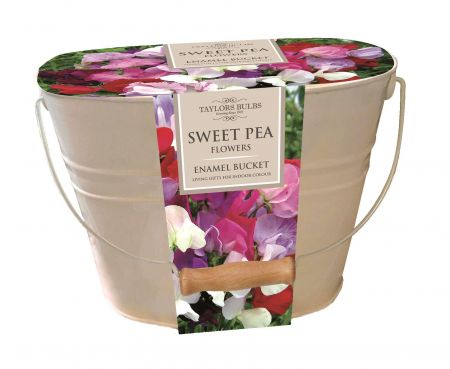 Sweet Pea Sweet Heart Gift Planter with Bulbs with Metal Embossed Pot SH35