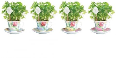 Ceramic Yellow Tea Cup Herb Grow Kit Gift Pack with Spoon Marker. Parsley