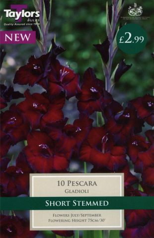 Gladioli Pescara bulbs x 10. Short Stemmed