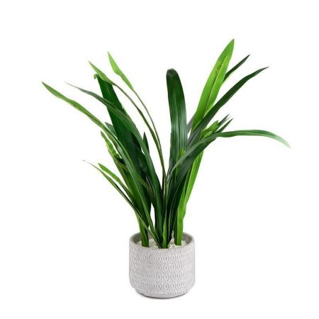 Aruba Grass Plant Artificial Plant in a White Embossed Pot 62cm tall