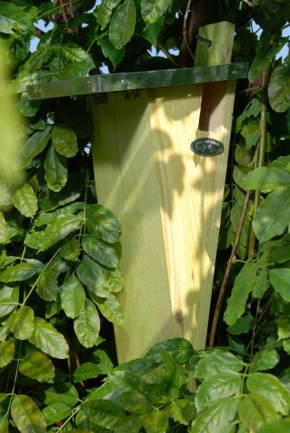 Treecreeper Bird House Nest Box Made from Wood