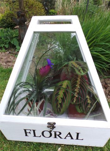 Pair of Terrariums with White Finish, display case for high humidity loving plants
