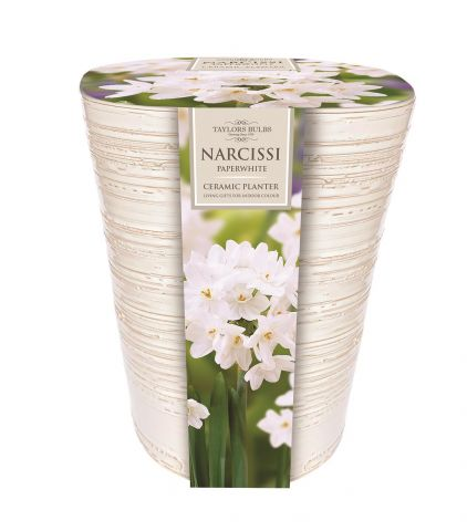 Indoor Narcissus Paperwhite Planter and Bulb Gift Set