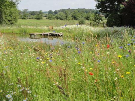 Wild Flower Seed Mix for Water Margins and Pond Edges. 20g