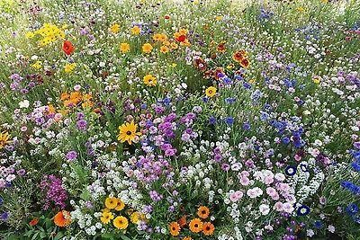 Throw to Grow Meadow Glints Flower Meadow Seed Mix.  Multi Year Flowering[50g - 10 sq m approx]