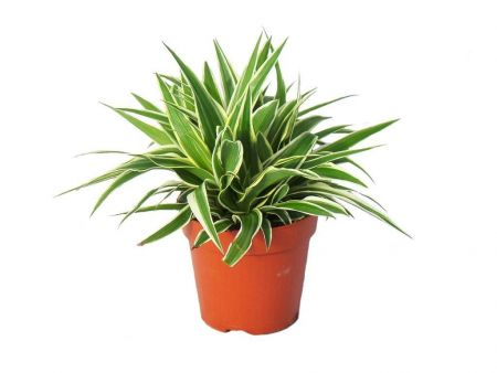 Air Purifying House Plants Collection of 5 Plants. Good for home and office