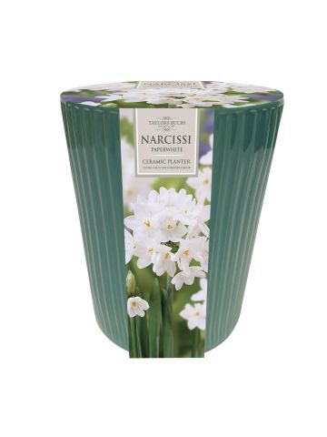 Indoor Paperwhite Ribbed Narcissi Planter Gift Set