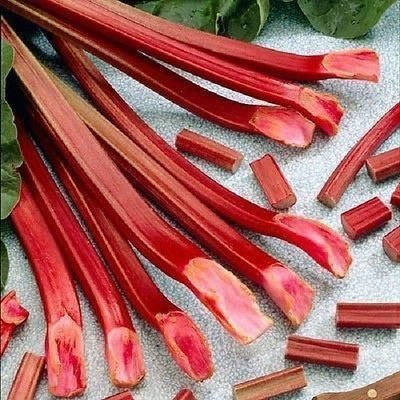 Rhubarb Red Champagne Plant in a 15cm Pot