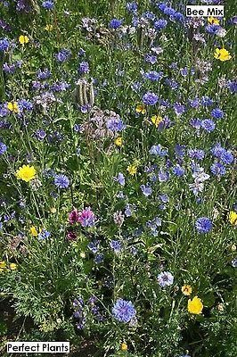 Throw 2 Grow Bee and Butterfly Meadow Flower Seed Mix.  Created by Cambs Uni.[10g - 2sqm]