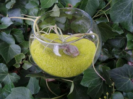Tillandsia air plant displayed in glass fishbowl with 600g GREEN sand