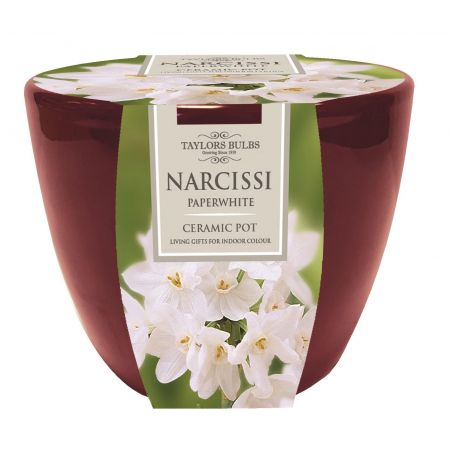 Indoor Paperwhite Narcissi Planter Gift Set