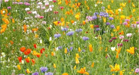 Wild Flower Seed Mix for General Purpose - 20g
