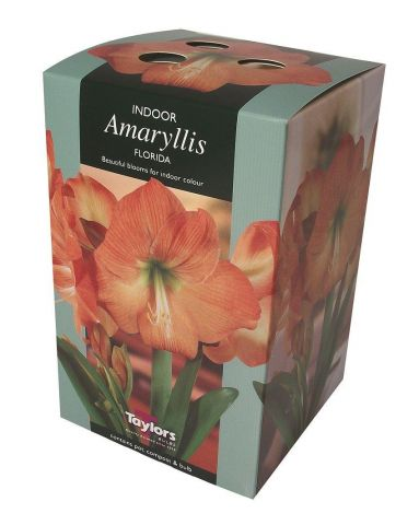Amaryllis Florida gift pack.  Amaryllis growing kit