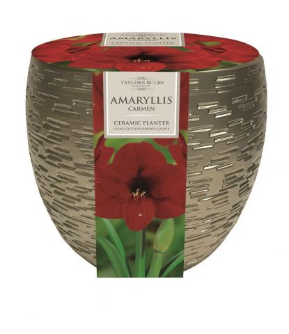 Amaryllis Carmen Bulb & Metallic Effect Planter Gift Set