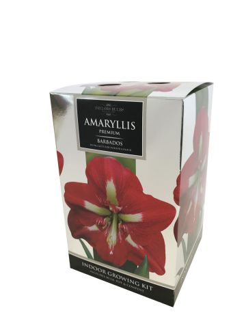 Amaryllis Barbados Gift Pack. Bulb pot and compost